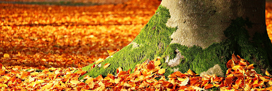 Leaves & Rates Change: Falling into Higher Rates